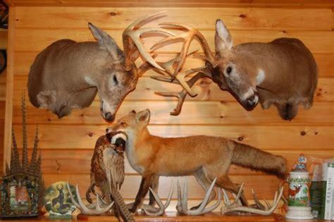 Taxidermy Home Decor: Best 25+ Deer Mounts Ideas On Pinterest