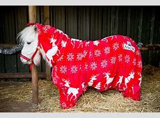 Onesies for horses this Shetland pony is winning at