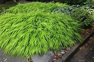 Farbenfrohe Schattenpflanzen Fr Ihren Garten