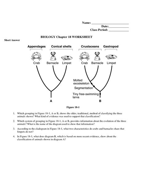 15 best images of classifying worksheet middle school science animal classification worksheet