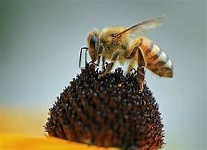 5 Types Of Pollination In Plants