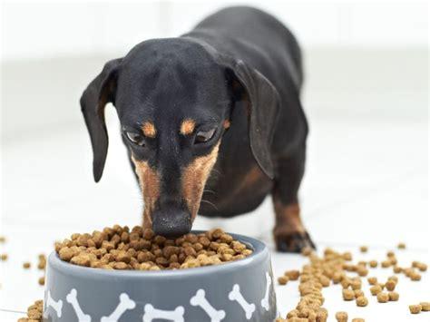 fettsaeuren sind fuer den hund gesund