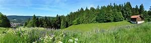 Ferienhaus Im Thüringer Wald : urlaub mit hund im th ringer wald in ferienwohnung ~ Lizthompson.info Haus und Dekorationen