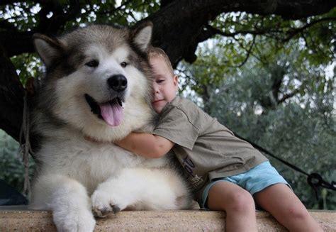dangerous dogs appearances   deceiving