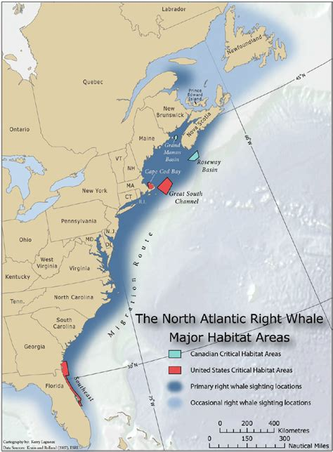 Atlantic Right Whale Diagram by Range And Habitats Of The Atlantic Right Whale