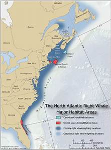 North Atlantic Right Whale Diagram