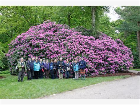 die schönsten gärten deutschlands rhododendronpark bad zwischenahn rhodopark bruns bad zwischenahn am meer rhododendronpark
