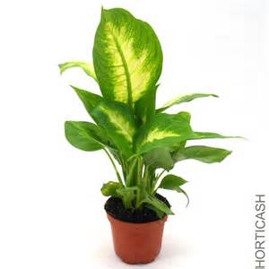 Plante Verte Chambre by Image Gallery Plantes