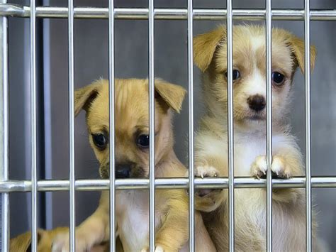 Why do animal charities get so many donations? Because we