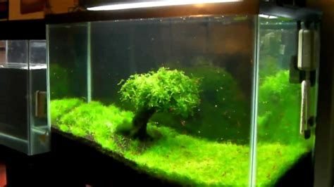 Aquascape Aquarium Grass