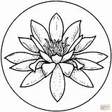 Lily Coloring Pages Print sketch template