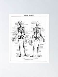 U0026quot Human Skeleton Labeled Diagram Black White Illustration
