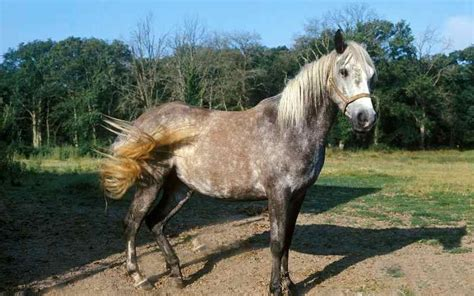 names horse andalusian male list
