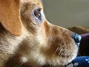 tumors in dog neck face