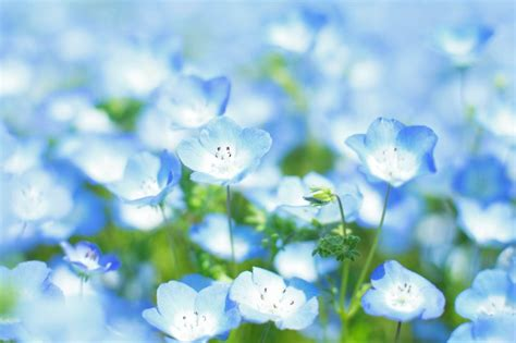 light blue flowers light blue flowers names www pixshark images