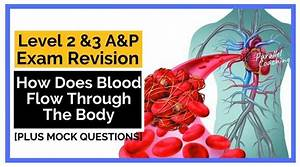 How Does Blood Flow Through The Body