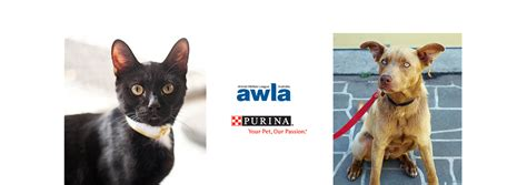 purina  awla partnership animal welfare league