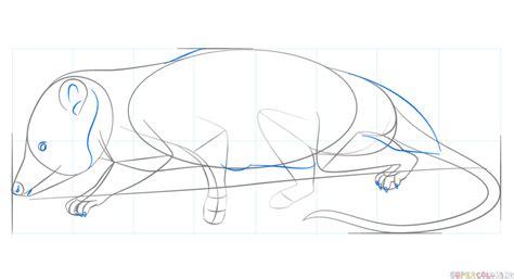 How To Draw A Virginia Opossum
