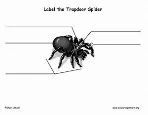 Spider  Trapdoor  Labeling Page