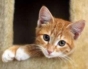 names for orange cats orange kitten names cats kittens
