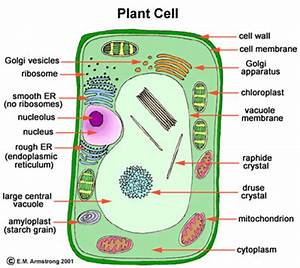 The Role of the Endoplasmic Reticulum and the Golgi Apparatus