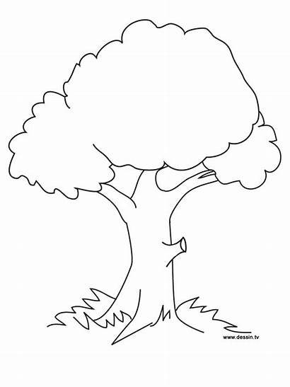 Coloring Pages Google Trees Flower Apple