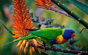 Multi Color Parrot 4K Full Hd Desktop Wallpaper - HD ...