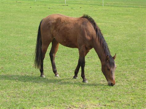 tick bites equine borreliosis horseback