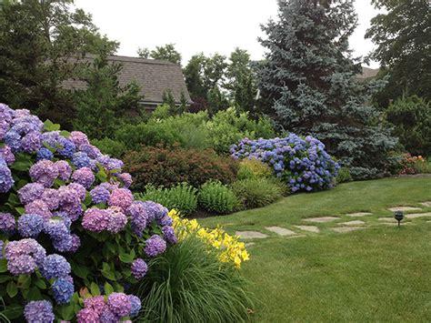 hydrangea garden design htons hydrangeas beach style landscape new york by petrowgardens landscape design