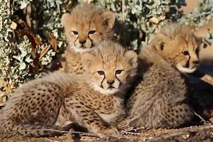 Vitesse Des Animaux : les b b s animaux les plus mignons d afrique du sud afrique du sud d couverte ~ Medecine-chirurgie-esthetiques.com Avis de Voitures