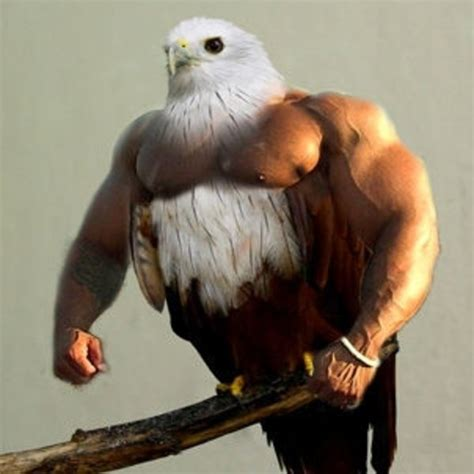 Meme Bird - birds with arms know your meme