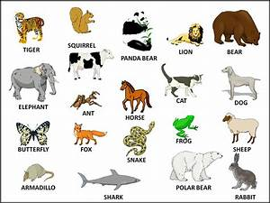 List of Animals | Download HD Wallpapers