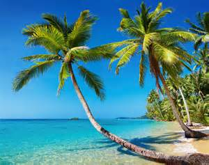 Florida Beaches with Palm Trees