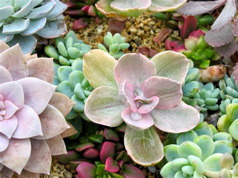 Garden Dancing: The Amazing World of Succulents
