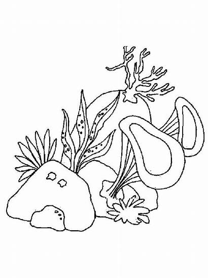 Seaweed Coloring Pages Mycoloring Nature Printable Colors