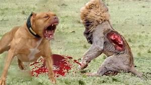 Lion vs bull Elephant Crocodile vs Elephant - Wild Boar ...