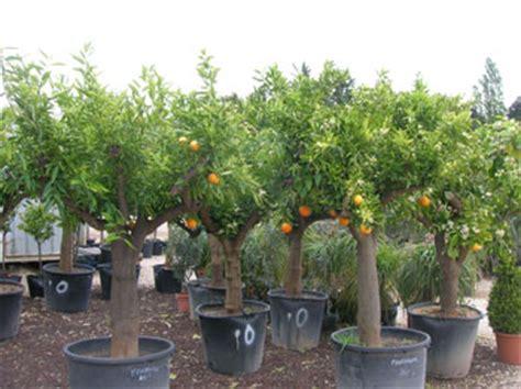 jardins de provaison jardinerie les fruitiers gt gt