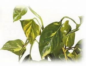 Plantes Pour Chambre : les plantes d polluantes pour la chambre coucher conseils en am nagements paysag s ~ Melissatoandfro.com Idées de Décoration
