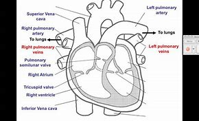 High quality images for easy way to draw heart diagram love99wall hd wallpapers easy way to draw heart diagram ccuart Image collections