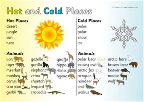 animal from and cold places primary teaching resources