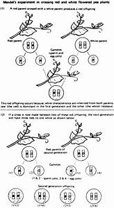 Genetics And God U2019s Natural Selection