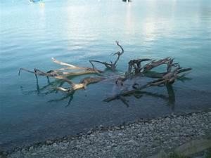 Holz Versiegeln Gegen Wasser : wurzeln ~ Lizthompson.info Haus und Dekorationen