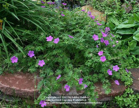 perennial flowers zone 5 zone 5 perennials front yard landscape pinterest