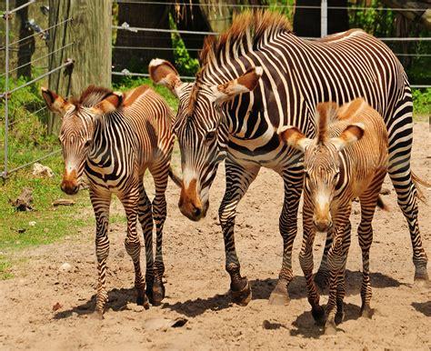 zoo animals fun park lowry wildlife dina adventures