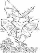 Bat Coloring Bats Pages Nectar Gathering Printable Colouring Cave Halloween Supercoloring Print Sheets Adult Pixels Butterfly Books Tcma 2800 2147 sketch template