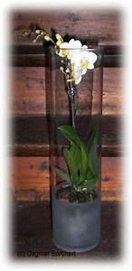 Orchideen Im Glas : orchideen im glas dekorieren nxsone45 ~ A.2002-acura-tl-radio.info Haus und Dekorationen