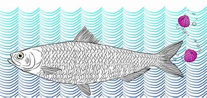 Fish Talk Mound Digg Lindsay Illustration