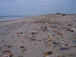 Atlantic Beach North Carolina Shells