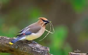 Small Birds Theme Windows