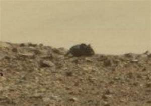 Giant 'Mouse' on Mars spotted by NASA's curiosity rover ...